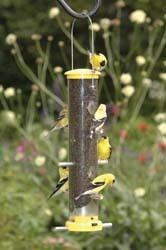 Quick-Clean Finch Feeders