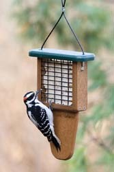EcoTough Tail-Prop Suet Feeder